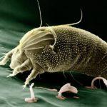 動物や虫などから感染する?! ベクター感染の代表的なウイルス・細菌とは?